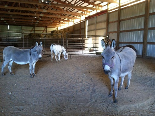 Holyland Donkey Haven Inc  - Home
